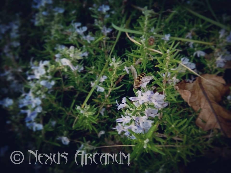 Nexus arcanum, incensi, incensi magici, incensi astrali, come fare un incenso magico, incenso rituale, incenso cerimoniale, erboristeria magica, erbe magiche, magia verde, incenso in stick, perché l'incenso in stick non va bene